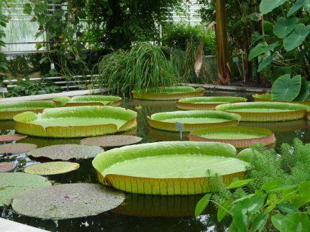 Botanischer Garten St. Gallen