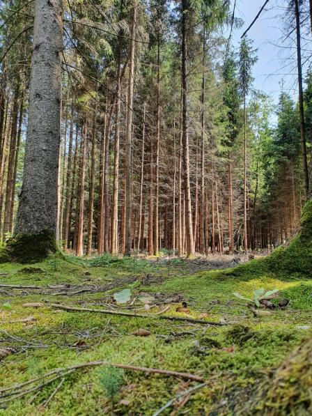 Wald St. Gallen